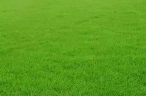 人造草坪的草毛形状有哪些,有什么区别?