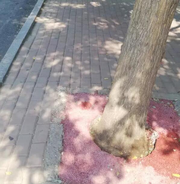 献县城管局安装透水景观树池